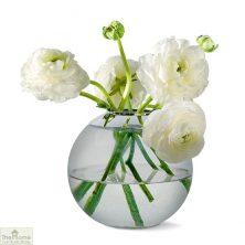 Globe Glass Vase