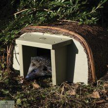 National Trust Hedgehog House